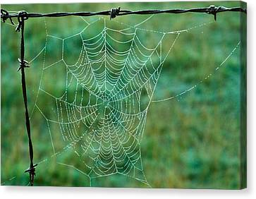 Spider Web In The Springtime Canvas Print by Douglas Barnett