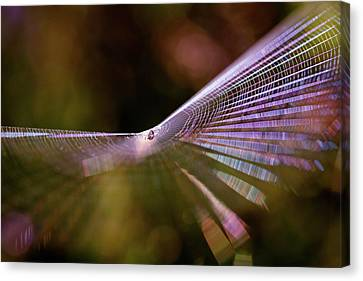Spider Web Rainbow Magic Canvas Print