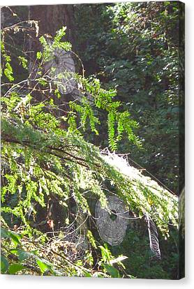 Spider Webs  -- Olympic National Park Canvas Print