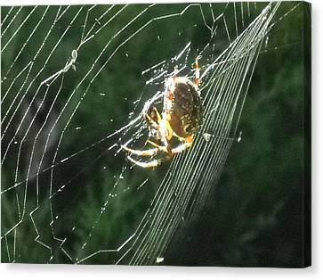 Spidey At Home Canvas Print by William Helzer