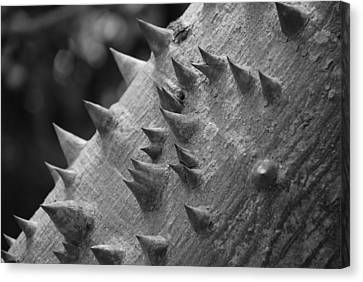 Spikey Thorny Tree Canvas Print by Rob Hans
