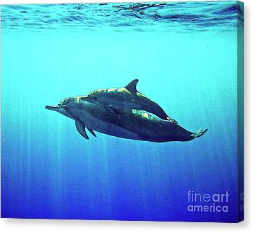 Spinner Dolphin With Baby Canvas Print