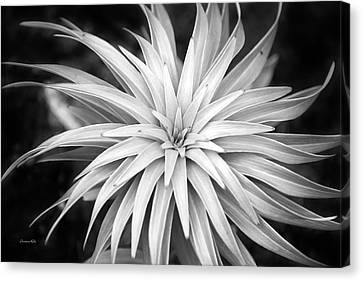 Canvas Print featuring the photograph Spiral Black And White by Christina Rollo