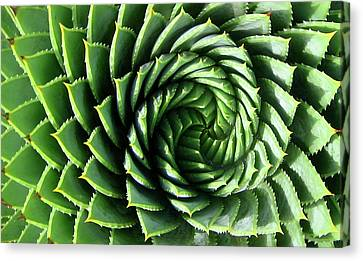Spiral Plant Canvas Print
