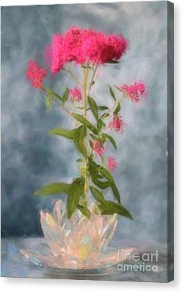 Spirea In Crystal Canvas Print