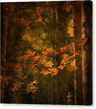 Canvas Print featuring the photograph Spirit Fall by Philippe Sainte-Laudy