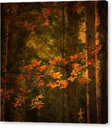 Spirit Fall Canvas Print by Philippe Sainte-Laudy
