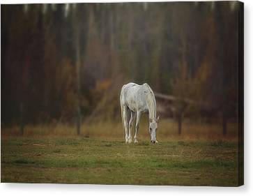 Spirit Horse Canvas Print by Debby Herold