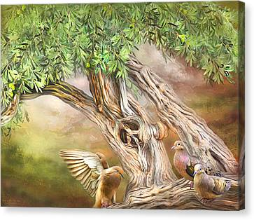 Canvas Print featuring the mixed media Spirit In The Olive Tree by Carol Cavalaris
