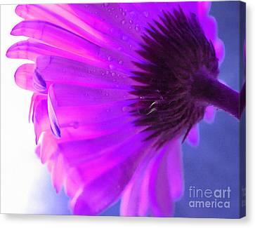 Digital Paint Flower Canvas Print - Spirit Light by Krissy Katsimbras