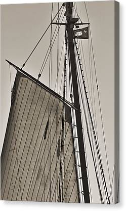 Spirit Of South Carolina Schooner Sailboat Sail Canvas Print by Dustin K Ryan