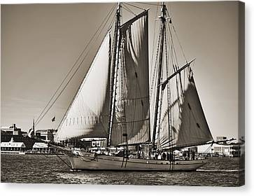 Spirit Of South Carolina Schooner Sailboat Sepia Toned Canvas Print by Dustin K Ryan