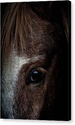 Spirit Canvas Print by Paul Neville