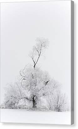 Canvas Print featuring the photograph Spirit Tree by Dustin LeFevre