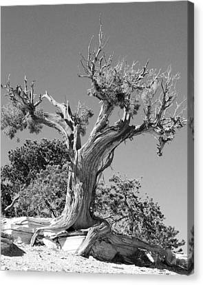 Canvas Print featuring the photograph Spirit Tree by Maggy Marsh