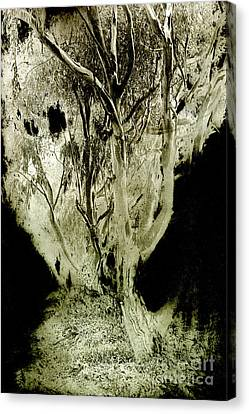 Spirit Tree Canvas Print by Paul W Faust -  Impressions of Light