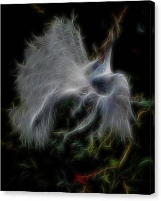 Spiritual Plumage Canvas Print by William Horden