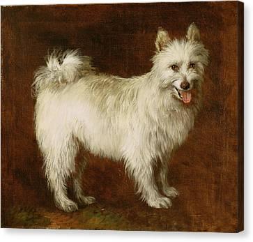 Spitz Dog Canvas Print