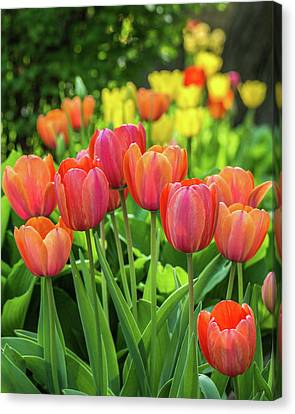Canvas Print featuring the photograph Splash Of April Color by Bill Pevlor