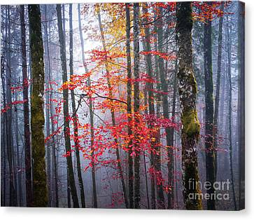 Canvas Print featuring the photograph Splash Of Colour by Elena Elisseeva