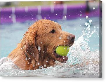 Splashing Around Canvas Print