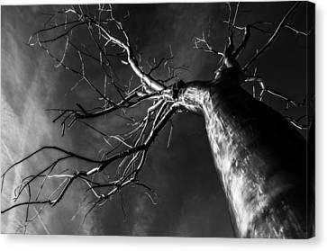 Split Black And White Canvas Print