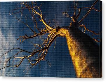 Split - Mosaic Tiles Canvas Print
