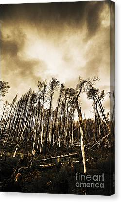 Sombre Canvas Print - Spooky Dark Woods by Jorgo Photography - Wall Art Gallery
