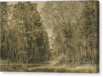 Spooky Old Woods Canvas Print
