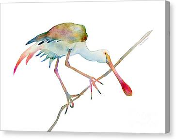 Waterfowl Canvas Print - Spoonbill  by Amy Kirkpatrick
