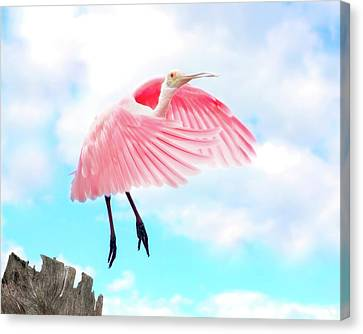 Spoonbill Canvas Print - Spoonbill Launch by Mark Andrew Thomas