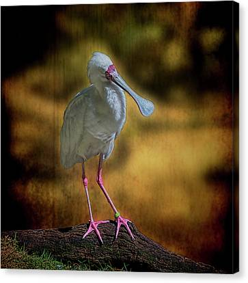 Canvas Print featuring the photograph Spoonbill by Lewis Mann