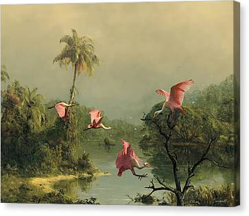 Spoonbill Canvas Print - Spoonbills In The Mist by Spadecaller