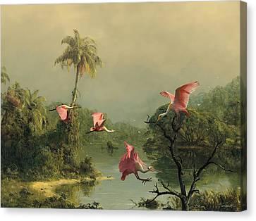 Spoonbills In The Mist Canvas Print