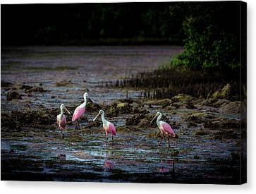 Wetland Canvas Print - Spooning Party by Marvin Spates