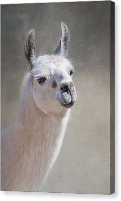 Canvas Print featuring the photograph Spot by Robin-Lee Vieira
