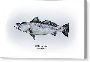 Spotted Sea Trout Canvas Print by Ralph Martens
