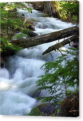 Sprague Creek Glacier National Park Canvas Print by Marty Koch