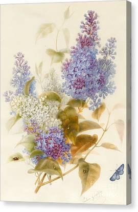 Spray Of Lilac Canvas Print by Pauline Gerardin