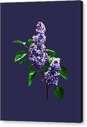 Spray Of Lilacs Canvas Print by Susan Savad