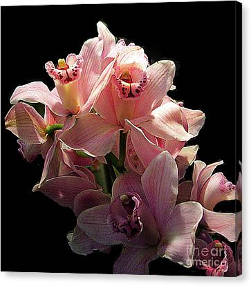 Spray Of Pink Orchids Canvas Print