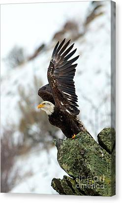Spread The Wings Canvas Print by Mike Dawson