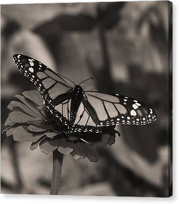 Spread Your Wings Canvas Print by Don Spenner