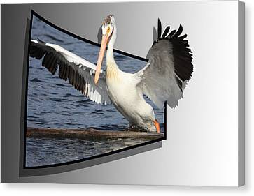 Spread Your Wings Canvas Print by Shane Bechler