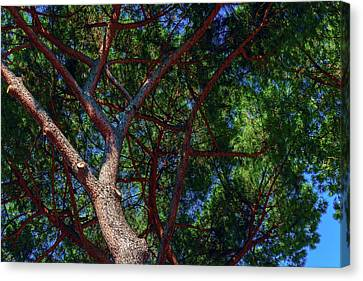 A Hot Summer Day Canvas Print - Spreading Trees Provide Shade And Coolness On A Hot Summer Day by George Westermak