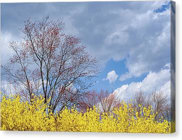 Early Spring Canvas Print - Spring 2017 by Bill Wakeley