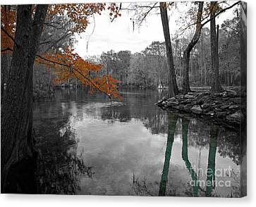 Canvas Print featuring the photograph Spring Alive by Blake Yeager