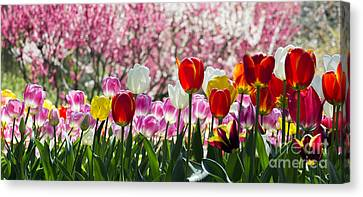 Spring Canvas Print by Angela DeFrias