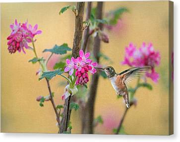 Spring Arrival Canvas Print by Angie Vogel