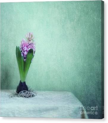 Spring Awakening Canvas Print by Priska Wettstein
